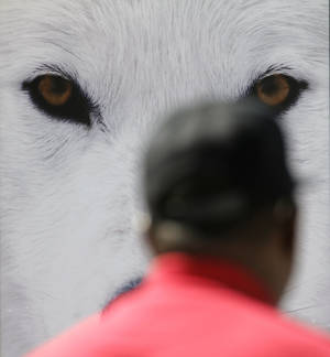 "Photo - ""Arctic Eyes,"" a photograph by Randy Napier of Grafton, N.D., watches over visitors  during the last day of the Festival of the Arts in Oklahoma City. Napier will also be featured at the Edmond Arts Festival.  Photo by Doug Hoke, The Oklahoman <strong>DOUG HOKE - THE OKLAHOMAN</strong>"