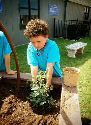 Photo - Saint Mary's Episcopal School student Mathew Damon plants a tomato plant.