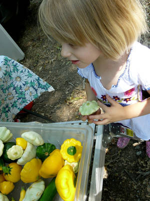 Photo - Hannah Defatta, 4, peeks into a bin of squash.