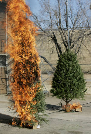 Photo - An unwatered real tree burns faster than a regularly watered one in a demonstration by Oklahoma City firefighters in 2008. THE OKLAHOMAN Archives