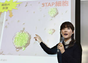 "Photo - FILE - In this Jan. 28, 2014 file photo, researcher Haruko Obokata, the lead author of a widely heralded stem-cell research paper by the Japanese government-funded laboratory Riken Center for Development Biology, speaks about research results during a news conference in Kobe, western Japan. The scientists who reported in January that they'd found a startlingly simple way to make stem cells have withdrawn that claim, following accusations of falsified data. On Wednesday, July 2, 2014, the journal Nature released a statement from the scientists who acknowledged ""extensive"" errors and said they couldn't say ""without a doubt"" that their method works. (AP Photo/Kyodo News) JAPAN OUT, MANDATORY CREDIT: KYODO NEWS"