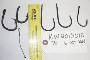 Photo - A Hawaii Pacific University photo shows five fish hooks found inside the stomach of a dead false killer Oct. 12 that washed ashore at South Point a week earlier. Scientists are still trying to determine why the animal, a member of a small population of dolphins declared endangered last year, died. AP File Photo