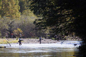 Photo - Fly fisherman on the Mountain Fork River in Beavers Bend State Park. Photo by David McDaniel, The Oklahoman