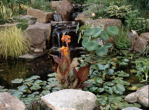 Photo - Accessorize small water features with plants generally found near ponds. AP Photo