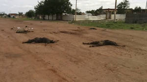"Photo - In this image taken from video, dead bodies lie on the road near Bentiu, South Sudan, on Sunday, April 20, 2014. The United Nations' top humanitarian official in South Sudan, Toby Lanzer, told The Associated Press in a phone interview on Tuesday, April 22, 2014, that the ethnically targeted killings are ""quite possibly a game-changer"" for a conflict that has been raging since mid-December and that has exposed longstanding ethnic hostilities. There was also a disturbing echo of Rwanda, which is marking the 20th anniversary this month of its genocide that killed 1 million people. (AP Photo/Toby Lanzer, United Nations)"
