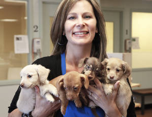 photo - Whitney Zeka-McFadden holds the four dogs she is fostering at the Central Oklahoma Humane Society Adoption Center on Wednesday. Photo By David McDaniel, The Oklahoman