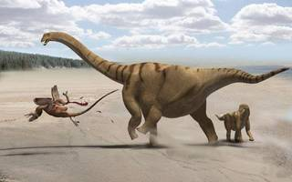 NEW DINOSAUR: Fig. 12. Speculative life restoration of the camarasauromorph sauropod Brontomerus mcintoshi from the Lower Cretaceous Cedar Mountain Formation of Utah. Adult individual (sized according to the referred scapula) protects juvenile (sized according to the holotype ilium) from a Utahraptor: the enlarged femoral protractors may have enabled a powerful kick. By Francisco Gasc?. Reproduced with permission. ORG XMIT: KOD