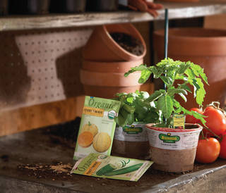 Edibles plants, such as herbs and vegetables, in seeds and live forms have been the fastest growing category in live goods the past five years at The Home Depot. Organic versions have been particularly popular. PHOTO PROVIDED BY THE HOME DEPOT