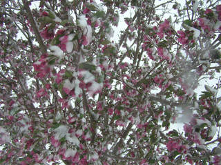 A reader submitted this photo of snowy weather in Oklahoma Friday, March 27, 2009.