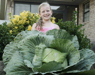 Winni Hiebert's huge cabbage allowed the Miami third-grader to walk away with a $1,000 savings bond earmarked for her college education as part of the Bonnie Plants Cabbage Program. Photo Provided
