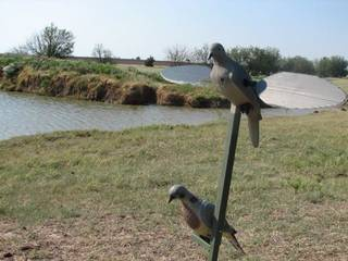 Dove decoys can help lure birds into shotgun range. Photo by By Ed Godfrey, The Oklahoman