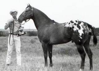 Navajo Britches won hundreds of awards through the years and was inducted into the Appaloosa Hall of Fame.