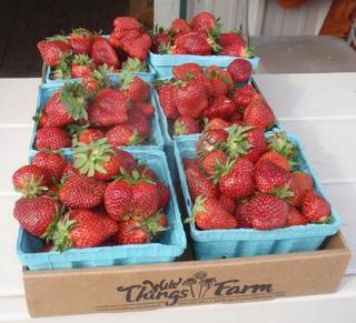 Wild Things Farm strawberries. (Photo by Happy Frazier)