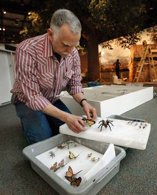 Terry Chase, director of Chase Studio, unpacks models of insects that have been created for a new exhibit featuring Oklahoma's Black Mesa, which opens Saturday at the Sam Noble Oklahoma Museum of Natural History. PHOTO BY STEVE SISNEY, THE OKLAHOMAN STEVE SISNEY