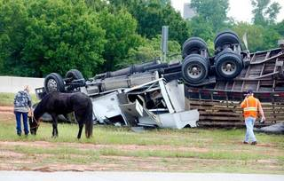 A horse stands next to an overturned tractor trailer that was transporting horses Tuesday morning on the Kilpatrick Turnpike. Photo by Paul B. Southerland