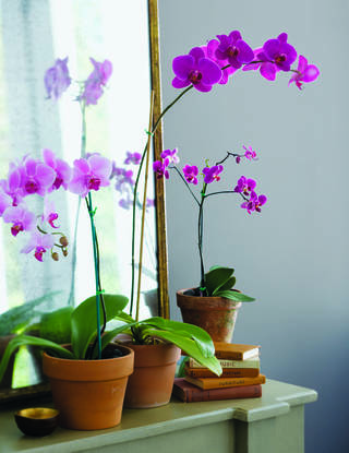 Bringing flowers and plants, like these orchids, indoors is one way to add calming elements to the interior of your home. PHOTO PROVIDED BY BENJAMIN MOORE