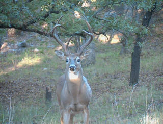 Oklahoma's 16-day deer gun season opens Saturday statewide. Photo by Oklahoma Department of Wildlife Conservation