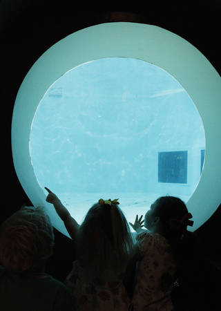 Students in summer camp at the Oklahoma City Zoo watch a sea lion at Aquaticus. Camps and programs with an educational theme can help keep kids academically engaged over the summer, a Duke University expert says. Photo by Paul B. Southerland, The Oklahoman PAUL B. SOUTHERLAND