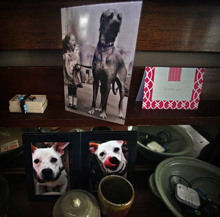 Snapshots and other memorabilia remind visitors that they are in the home of dog lover, Suzanne Berg, February 9, 2013, in Minneapolis, Minnesota. A reunion of five dogs born in the same litter was recently held at her home. The rescue dogs, and some of their K-9 friends, were accompanied by their owners and guests. (Jim Gehrz/Minneapolis Star Tribune/MCT)