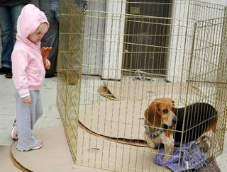 Kelsie Martin, 2, of Shawnee, looks at one of many dogs available at an adoption fair held Thursday, Oct. 22, 2009, for the more than 90 rescued canines from a Pottawatomie County puppy mill. Photo by Ann Kelley, The Oklahoman