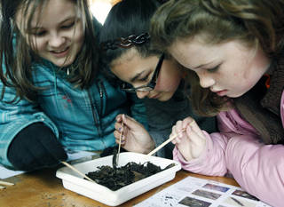 Right: Perkins fifth-graders Harley Houston, left, Breanna Arzola and Cloey Maloy look for buried insects during ScienceFest at the Oklahoma City Zoo. Photos By Paul Hellstern, The Oklahoman