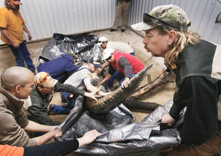 G.W. Exotic Animal Park Director Joe Schreibvogel, right, directs the release of a 12-foot alligator recovered from a private pond near Stuart. Photo by steve Sisney, The Oklahoman