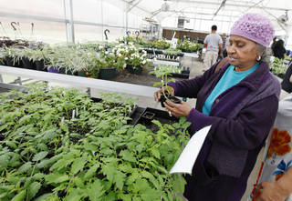 Josephine Wilson, of Oklahoma City, looks at plants during a sale at Oklahoma Centennial Mid-High School. Photo by Paul B. Southerland, The Oklahoman