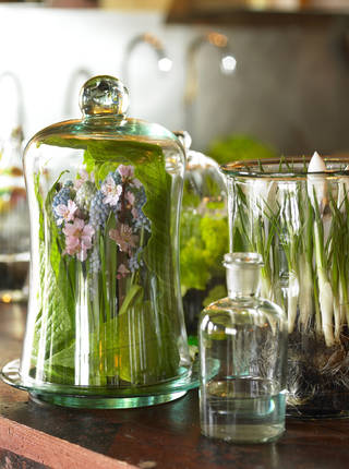 Enclose your favorite blooms in glass container such as a terrarium or glass jar with an ornamental lid. Photo provided by iBulb. Wilfried Overwater