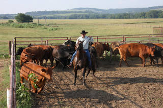 Mike Justesen, general manager of the Mormon Church-owned cattle ranch in Pawhuska, shows off some cowboy techniques. PHOTO PROVIDED.