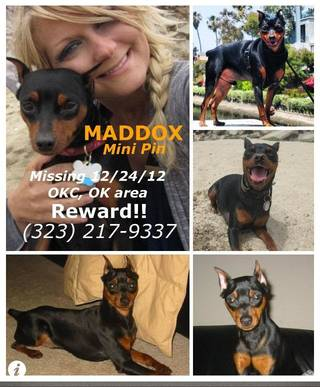 Jackie Vestal has been in Oklahoma City since Christmas searching for her dog, Maddox. Vestal has put up posters throughout Oklahoma City in an effort to find the dog. Photo provided