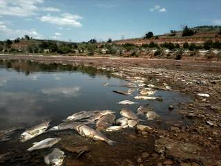 Dead carp and drum just below the spillway of the Great Salt Plains Lake in northwest Oklahoma. Photo by Ryan Shelton