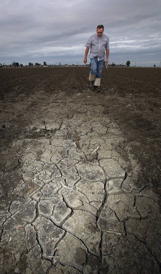 A farmer in Lemoore, Calif., checks his dry tomato bed. A severe drought will cut into California vegetable harvest this year. AP photo Gary Kazanjian - AP