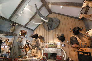 Bill Lockard's trophy room at his home in Oklahoma City, Wednesday July 31, 2013. Photo By Steve Gooch, The Oklahoman
