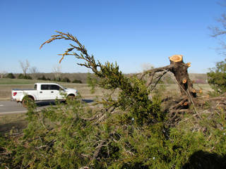 Eastern red cedars, which are a fire hazard and compete for water resources, have been cut down and stacked on Oklahoma State University land in Stillwater.
