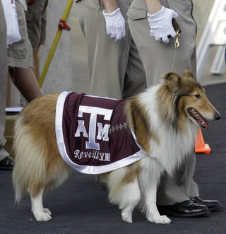 Texas A&M mascot Reveille VIII during the second quarter of an NCAA college football game against Louisiana Tech Saturday, Sept. 11, 2010, in College Station, Texas. (AP Photo/David J. Phillip) ORG XMIT: NYOTK