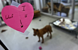 Workers at the Oklahoma City Animal Shelter have decorated in preparation for a Valentine's Day adoption special that begins Sunday. The shelter will have half-price adoptions all week and special activities Sunday. Photos by Chris Landsberger, The Oklahoman
