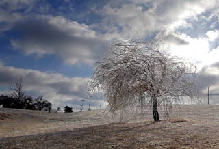 December's ice covers a tree at Edmond's J.L. Mitch Park. The ice that happened months ago could be affecting the growth of trees this spring. PHOTO BY SARAH PHIPPS, THE OKLAHOMAN SARAH PHIPPS - The Oklahoman
