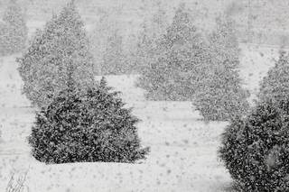 Heavy snow falling in northwest Oklahoma City at 8:15 am Monday, Feb. 8, 2010. Photo by Paul B. Southerland