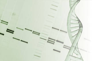 Scientists can now determine your entire genetic make-up in less than one day and for a price of $1,000. Comstock