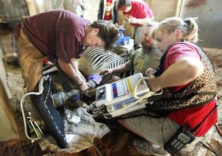 """ZEBRA HOOF TREATMENT: Dee Corley (left), Zoo Equine Podiatrist, Animal Keeper Brian Whitsitt, and Sr. Veterinarian Dr. Jennifer D'Agostino attempt to take an X-ray, as work is done to treat an abscessed hoof on """"Zephra"""", a Grevy's zebra at the Oklahoma City Zoo in Oklahoma City, OK, Tuesday, Oct. 25, 2011. By Paul Hellstern, The Oklahoman ORG XMIT: KOD"""