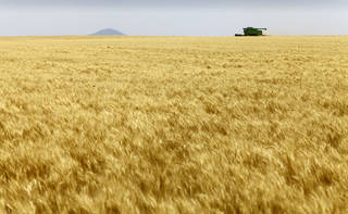 Josh Gammill harvests wheat in a field near Faxon. David McDaniel - The Oklahoman