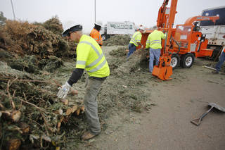 Edmond city worker Michael Brown gets a Christmas tree ready for the chipper. City crews spent Wednesday turning donated trees into mulch, which will be available to Edmond residents free and on a first-come, first-served basis at 8 a.m. Friday at J.L. Mitch Park. PHOTOS BY STEVE GOOCH, THE OKLAHOMAN