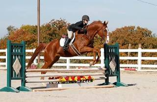 2005 Oklahoma Classic Champion Zee Oh Six competing at the 2012 Sport of Kings Challenge. Photo provided