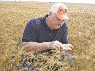Mark Hodges is shown in a wheat field near Hobart in 2008. Oklahoman Archives Photo Ron Jackson -