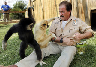 Bill Meadows of Tiger Safari plays with Marley, left, and Teeka, his two newly acquired gibbon apes. STEVE SISNEY