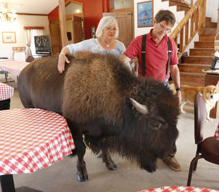 Owners James and Sandra Stepp pet their pet buffalo Stormy on July 29 at Sandy Springs Farms near Hinton. Photo by Paul Hellstern, The Oklahoman PAUL HELLSTERN - Oklahoman