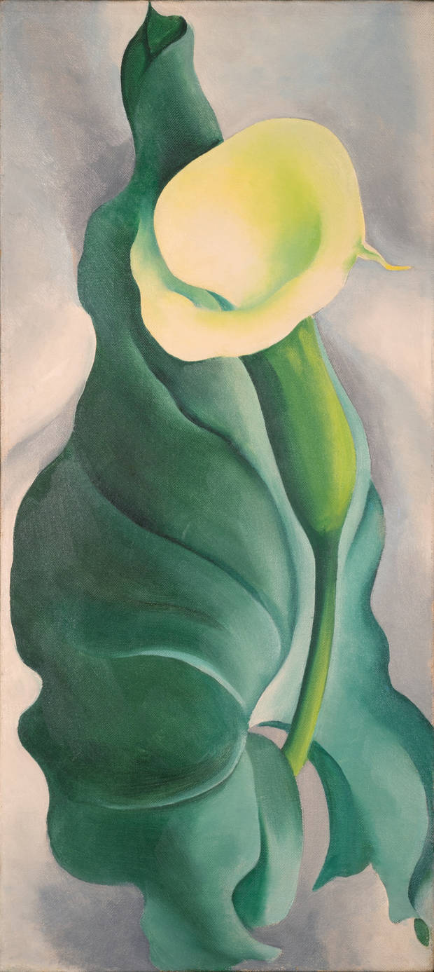 Georgia O'Keeffe (American, 1887–1986). Calla Lily (Lily – Yellow No. 2), 1927. Oil on canvas. Oklahoma City Museum of Art. Westheimer Family Collection, 2005.056. Photo provided by OKCMOA