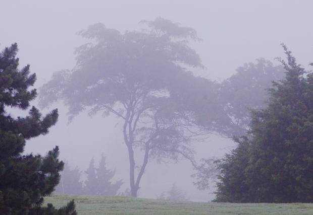 photo - Trees disappear into the fog just before sunrise in northeast Oklahoma City Wednesday, May 28, 2014. Photo by Paul B. Southerland, The Oklahoman