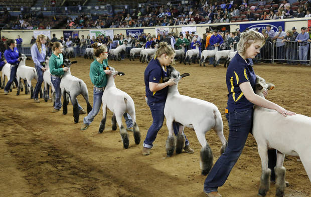 Students show their sheep as judges scrutinize the animals during competition in the Market Wether Lamb Show as part of the Oklahoma Youth Expo on Thursday, March 15, 2018, at State Fair Park. The event ends on Friday. Photo by Jim Beckel, The Oklahoman