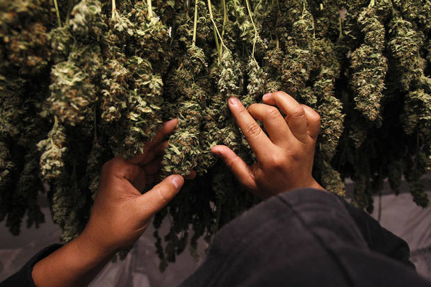 Record high 60 percent of Americans back legal pot, poll finds